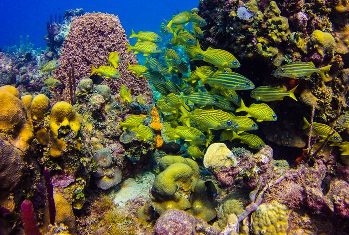 Best Catalina Island Snorkel Excursion From Punta Cana